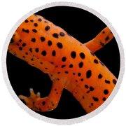 Red Salamander Round Beach Towel