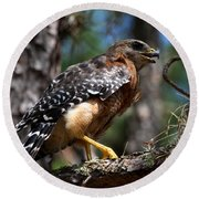 Red Shouldered Hawk Round Beach Towel