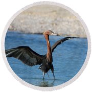 Reddish Egret Round Beach Towel