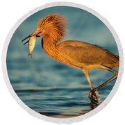 Reddish Egret With Fish Round Beach Towel