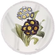 Redoute: Auricula, 1833 Round Beach Towel