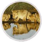 Reflected Lions Round Beach Towel
