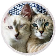 Rescued And Spoiled Round Beach Towel