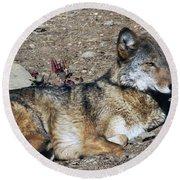 Resting Wolf Round Beach Towel