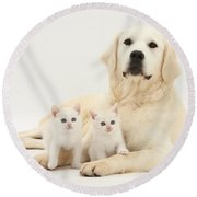 Retriever With Friendly Kittens Round Beach Towel