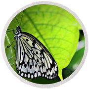 Rice Paper Butterfly 6 Round Beach Towel
