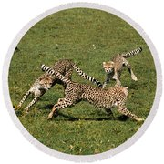 Ring Around The Cheetahs Round Beach Towel