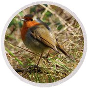Robin In Hedgerow Round Beach Towel