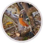 Robin On Cut Down Tree Branch Round Beach Towel