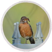 Robin With Worm I Round Beach Towel