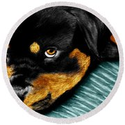Rotty Round Beach Towel