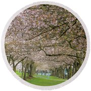 Rows Of Cherry Blossom Trees In Spring Round Beach Towel
