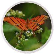 Ruddy Daggerwing Butterfly Round Beach Towel