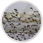 Sand Pipers In Flight Round Beach Towel