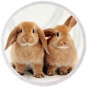 Sandy Lop Rabbits Round Beach Towel
