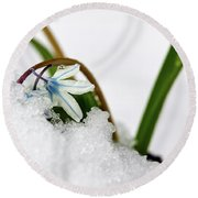 Scilla On Snow Round Beach Towel