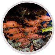 Shoulderbar Soldierfish Round Beach Towel