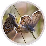 Silver-studded Blue Butterflies Round Beach Towel