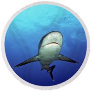 Silvertip Shark Round Beach Towel