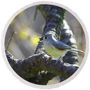Tufted Titmouse - Small Bird Round Beach Towel