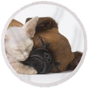 Small Brabant Griffon, Petit Brabancon, Puppy Dog With Laperm Kitten Round Beach Towel