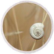 Snail On Autum Grass Blade Round Beach Towel