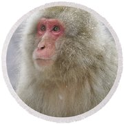 Snow-dusted Monkey Round Beach Towel