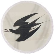 Sooty Tern Round Beach Towel