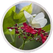 Southern White Butterfly  Round Beach Towel