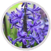 Spring Time With Blooming Hyacinth Flowers In A Garden Round Beach Towel