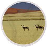 Springbok At Sossusvlei Round Beach Towel