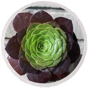 Succulent Rose Round Beach Towel