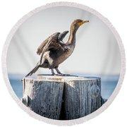 Sunbathing Cormorant Round Beach Towel