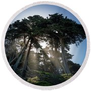 Sunbeams From Large Pine Or Fir Trees On Coast Of San Francisco  Round Beach Towel