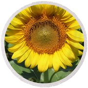 Sunflower 09 Round Beach Towel