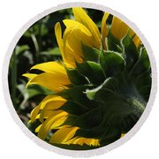 Sunflower Series 09 Round Beach Towel