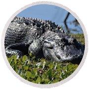 Sunning Gator Round Beach Towel