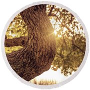Sunset On A Tree Round Beach Towel
