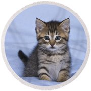 Tabby Kitten Round Beach Towel