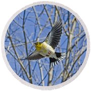 The American Goldfinch In-flight, Round Beach Towel