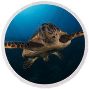 The Hawksbill Sea Turtle, Bonaire Round Beach Towel by Terry Moore