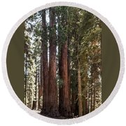 The House Group Giant Sequoia Trees Sequoia National Park Round Beach Towel