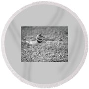 Three Banded Plover Round Beach Towel