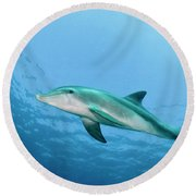 three year old Dolphin  Round Beach Towel