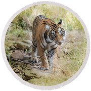 Tiger In The Woods Round Beach Towel