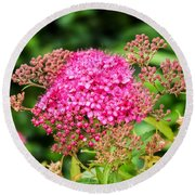 Tiny Pink Spirea Flowers Round Beach Towel