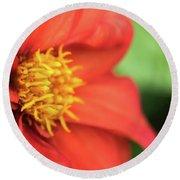 Tithonia Rotundifolia, Red Flower Round Beach Towel