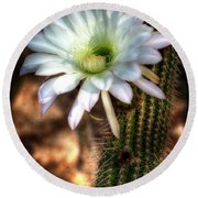 Torch Cactus - Echinopsis Candicans Round Beach Towel
