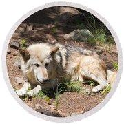 Tour Of Rocky Mountain Wildlife Foundation Round Beach Towel