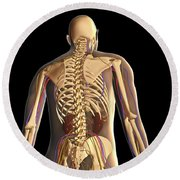 Transparent View Of Human Body Showing Round Beach Towel